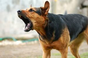Recovering Compensation for Dog Bite Injuries